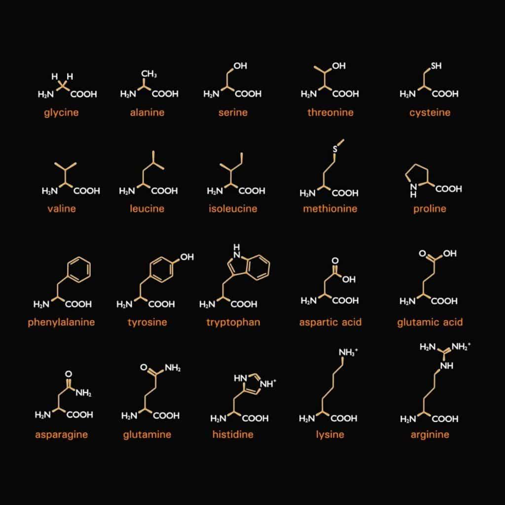Aminosäuren-testen