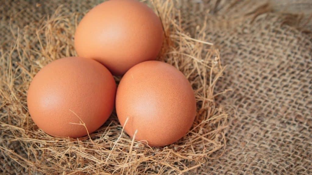 Ei Allergie - Drei Eier liegen auf Stroh