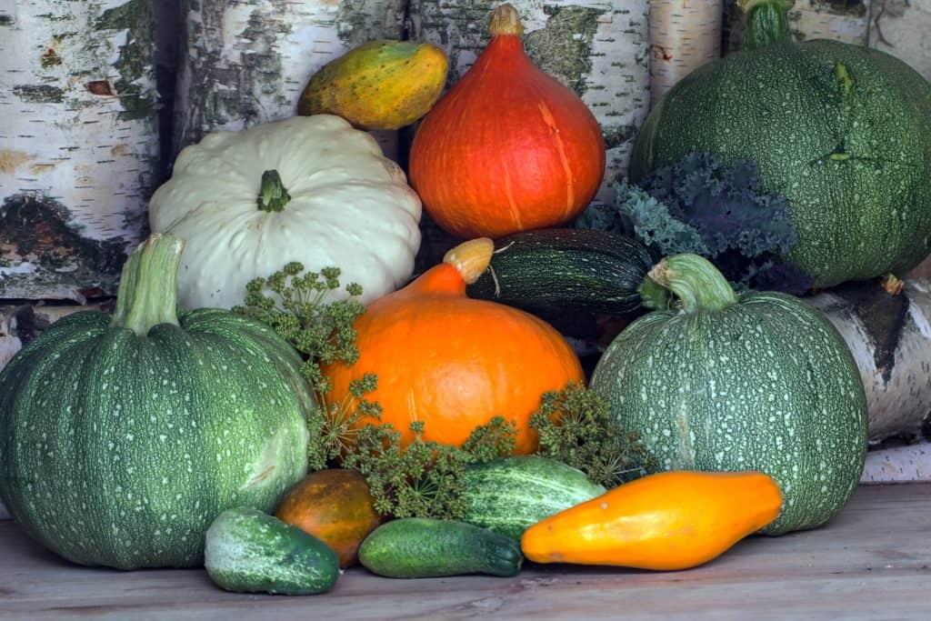 Unverträglichkeit Zucchini